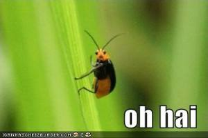 funny-pictures-oh-hai-bug